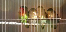 Haustier in der Mietwohnung – Welche sind erlaubt?