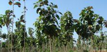 Betrügerische Waldinvestments? Sharewood & Co