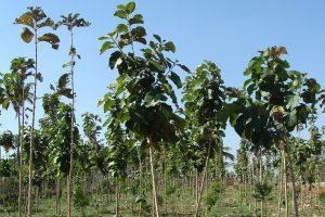Betrügerische Waldinvestments? Sharewood, Life Forestry & Co